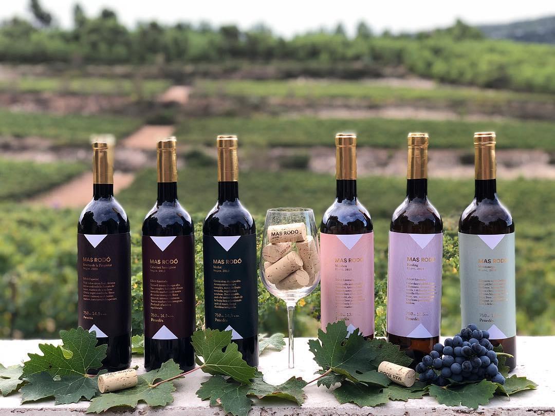 Visita y cata 3 vinos